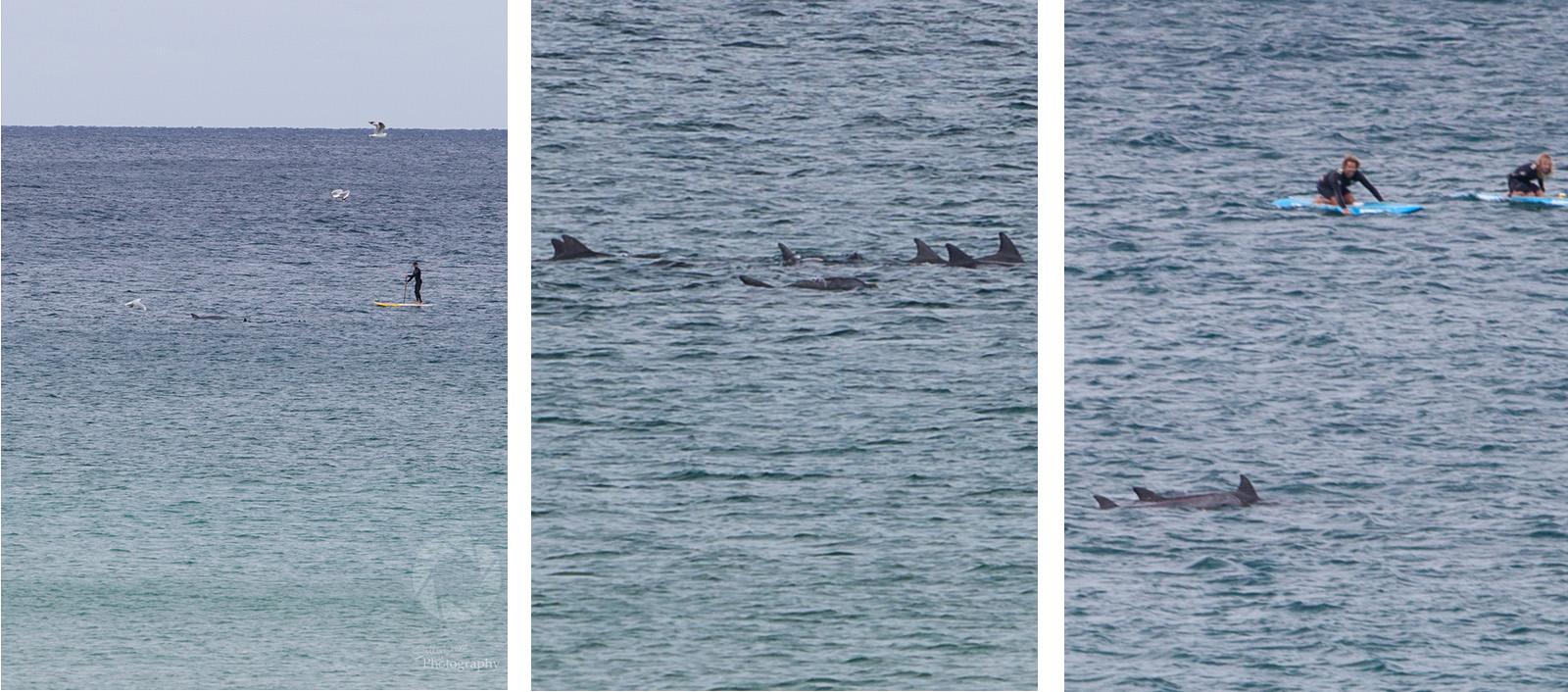 sally_crane_travel_photographer_bondi_dolphins.jpg