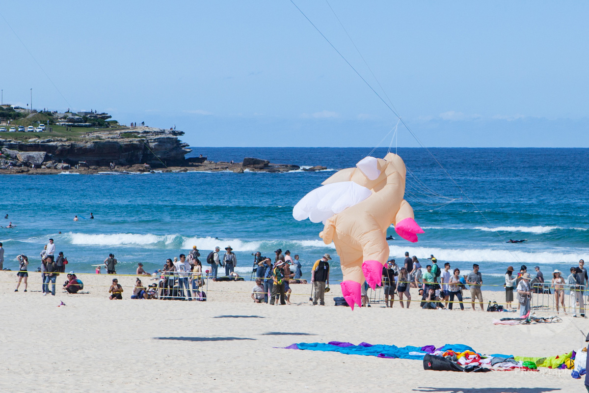 sally_crane_travel_photographer_bondi_flying_pig_kite.jpg