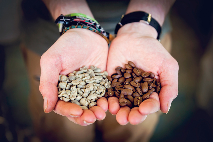 Raw 'green' beans come from coffee 'cherries', after harvesting, processing, drying and milling. Roasting is the final step in the long process to produce coffee.