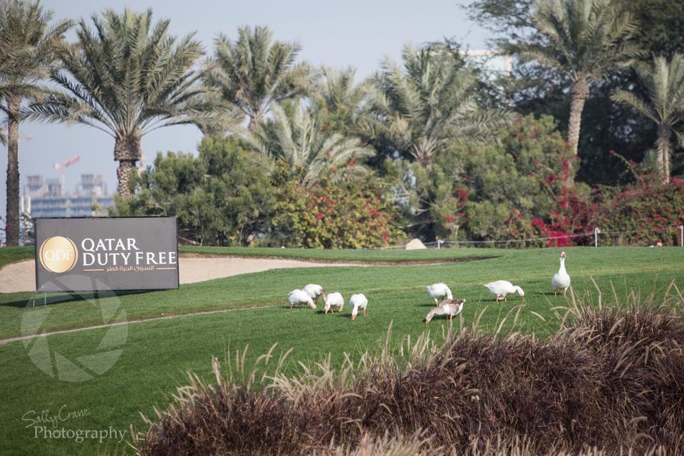qatar-golf-masters-10.jpg