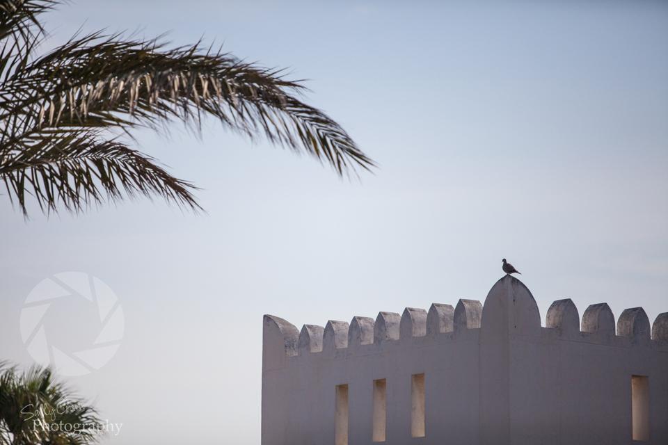 qatar-golf-masters-20.jpg