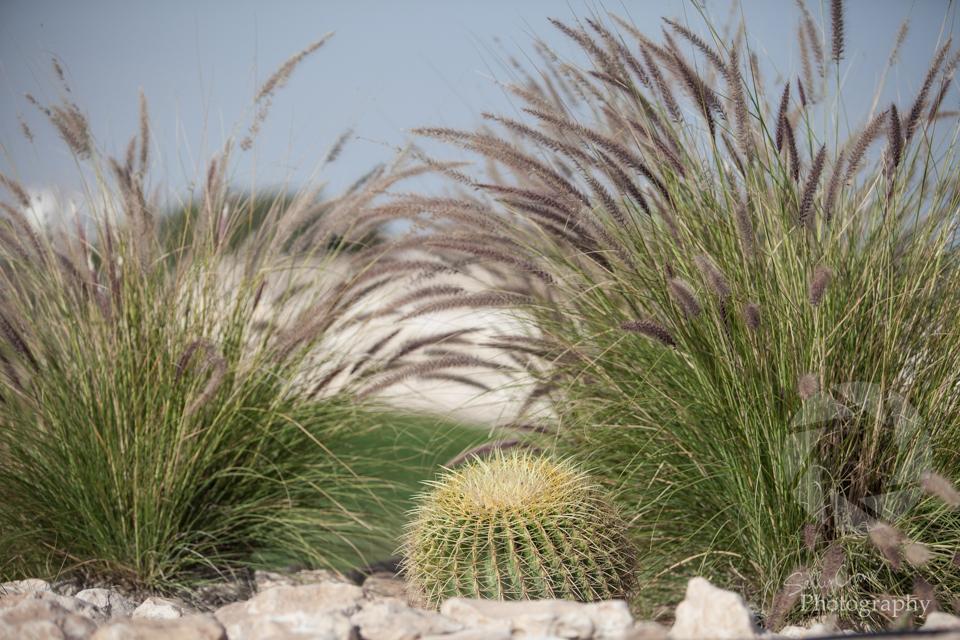 qatar-golf-masters-5.jpg