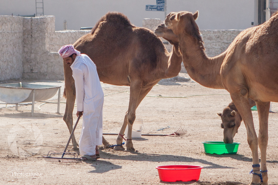 travel-photography-souq-waqif-doha-16.jpg